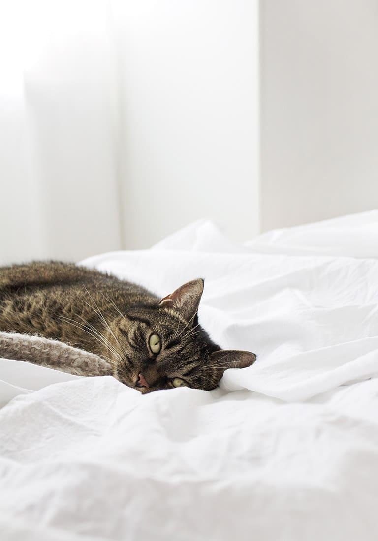 Image Carousel Cat - Jupiter X Elements - Image Gallery