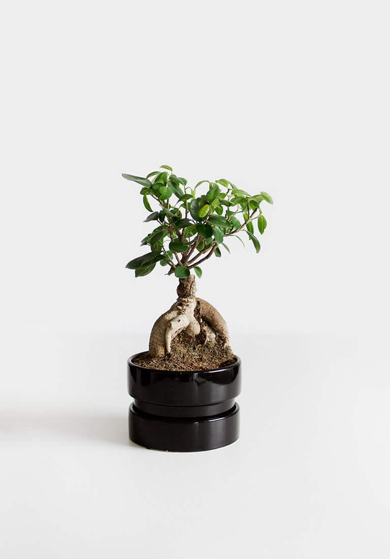 Image Carousel Bonsai - Jupiter X Elements - Image Gallery Green