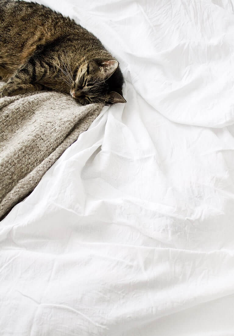 Image Carousel Kitty - Jupiter X Elements - Image Gallery Sleep