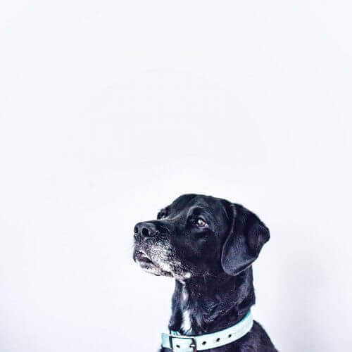 Image Dog - Jupiter X Elements